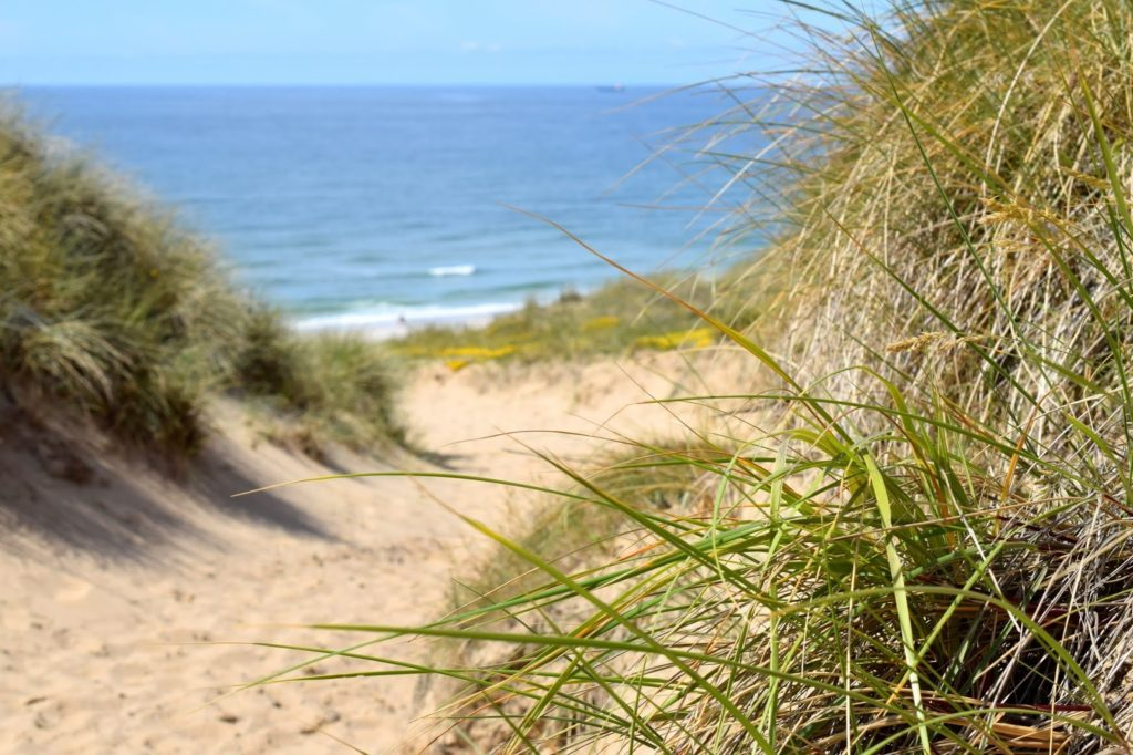 Sommer auf Sylt: Dünen