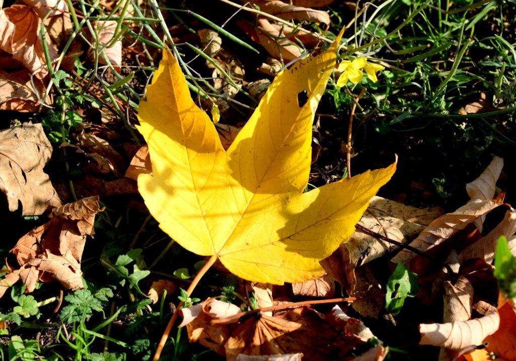 Fotografisch durch die Jahreszeiten: Herbst