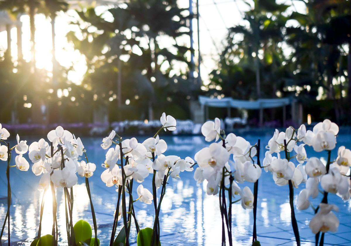 thermen-badewelt-sinsheim-palmen-paradies-sauna-orchideen