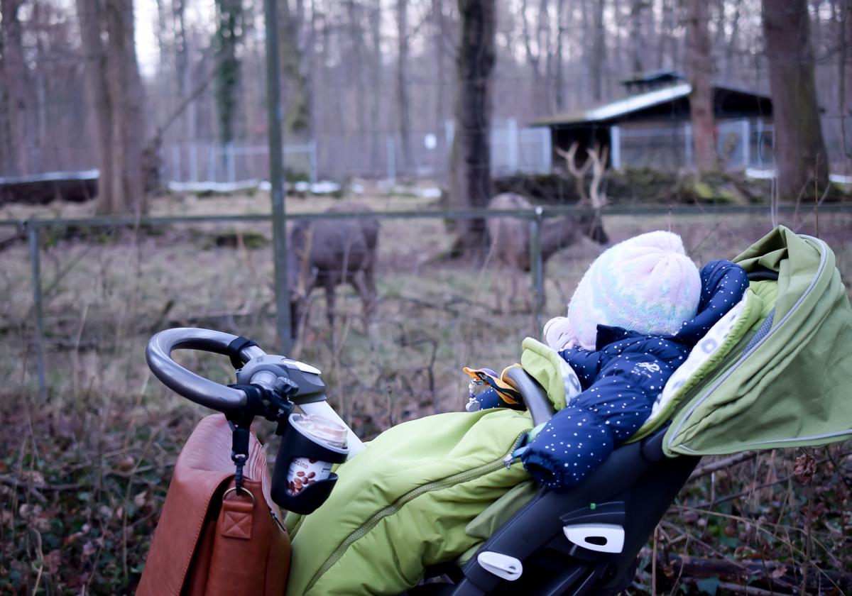 Familienausflug in den Tierpark im Winter mit Kleinkind in den Wildpark Oberwald Karlsruhe