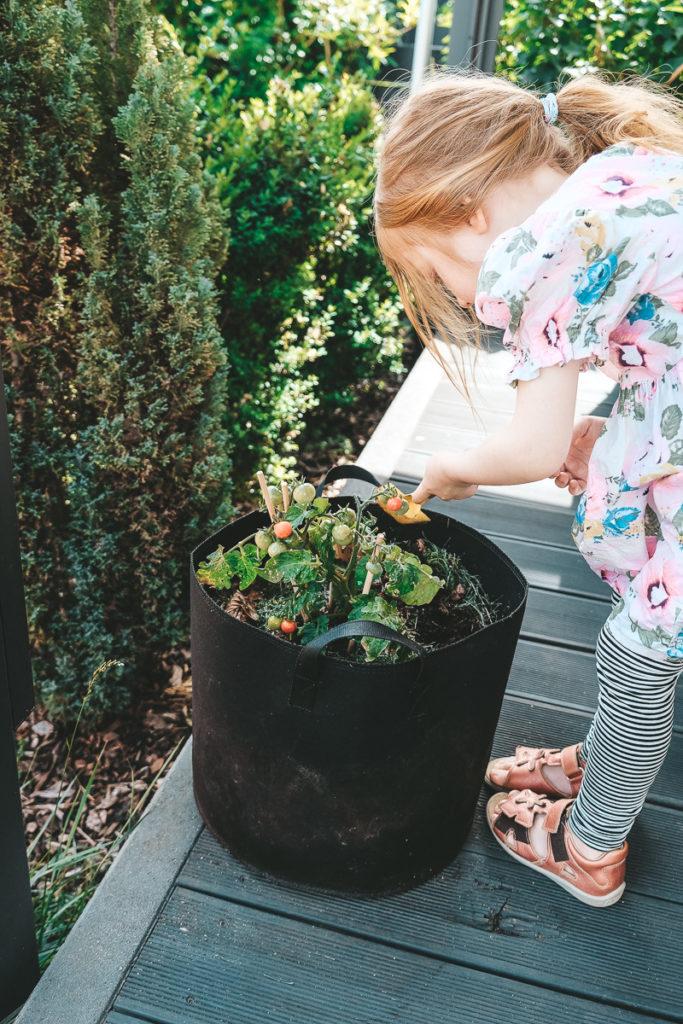 Gemüse ohne Garten anbauen