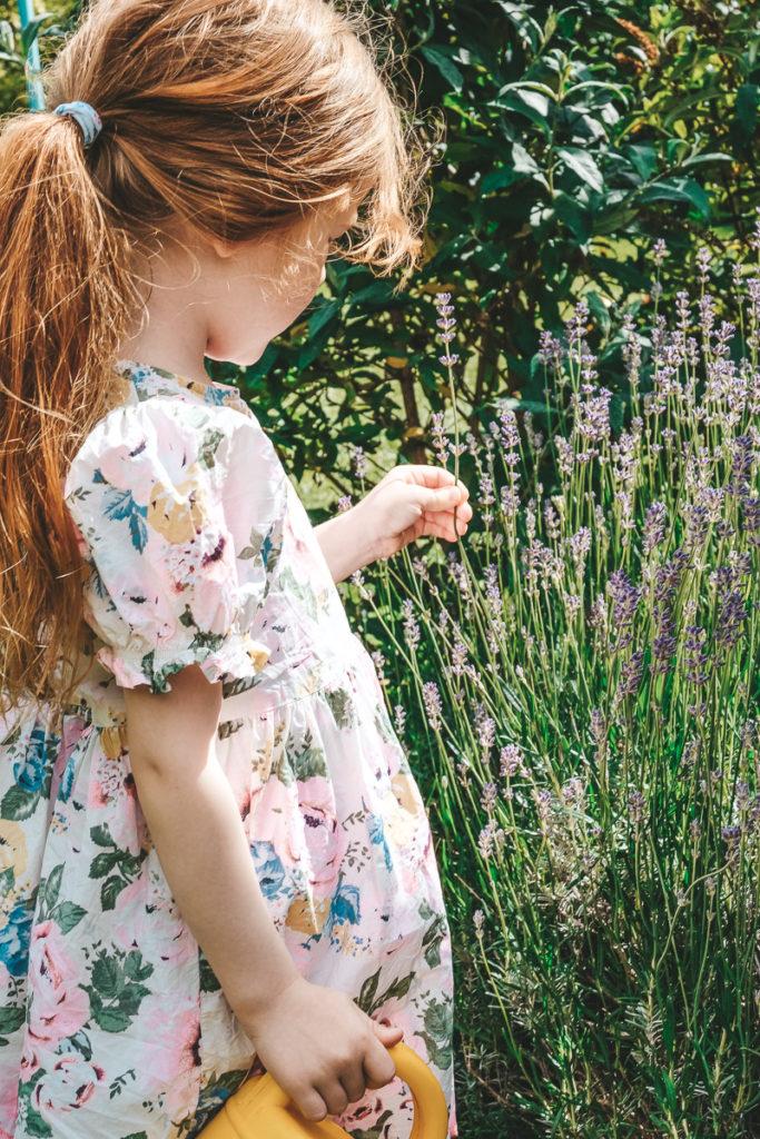 Lavendel anbauen mit Kindern