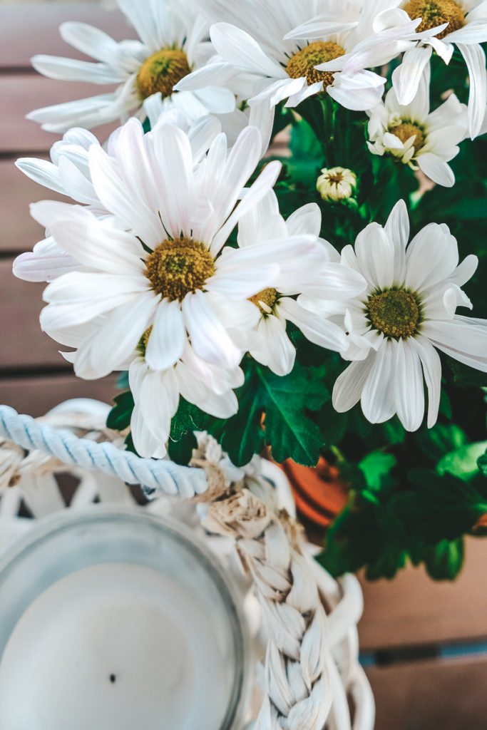 Herbst Blumen Tipps