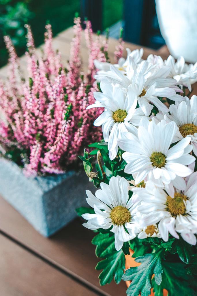 Herbst Pflanzen mit Blüten Tipps