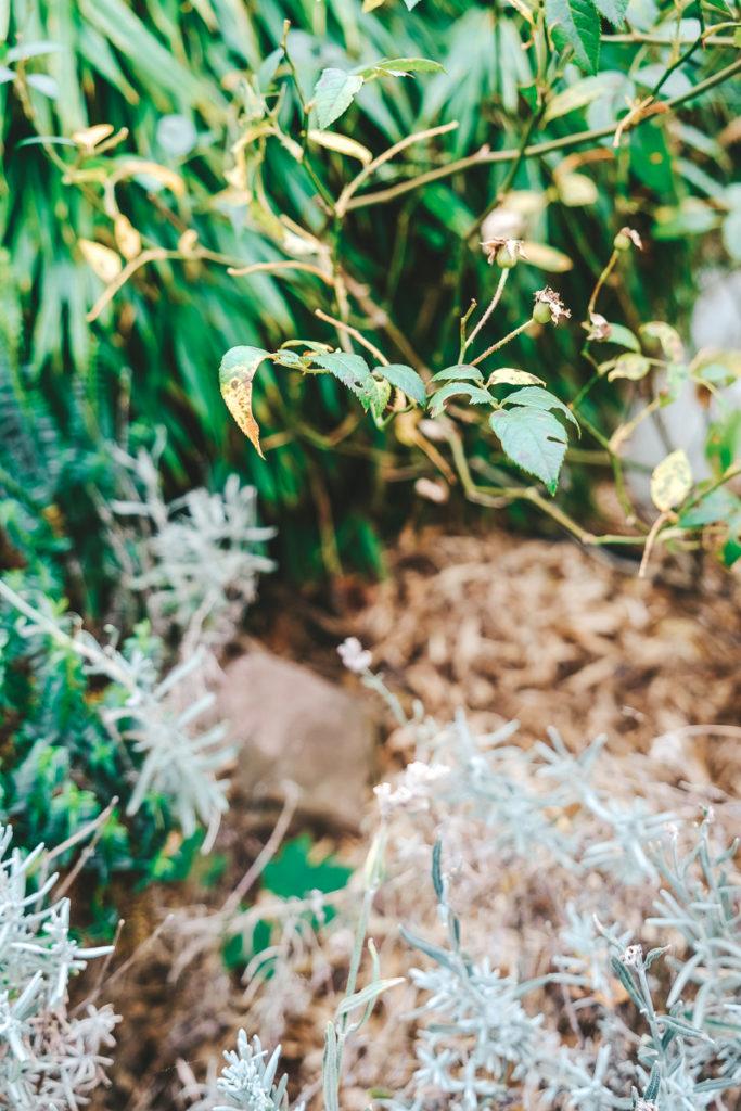 Igelnest im Garten