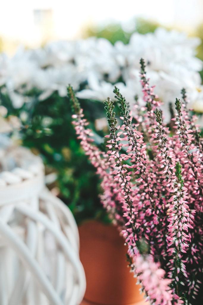 Tipps für blühende Pflanzen im Herbst