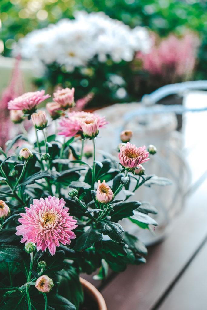Tipps Herbstpflanzen die blühen